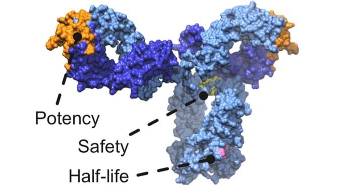 Centivax's SARS-CoV-2 (COVID-19) monoclonal antibody